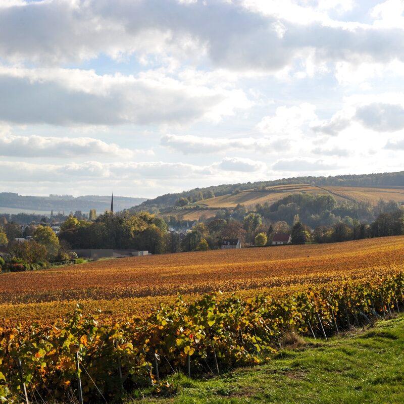 Vigne automne et clocher Essomes sur Marne